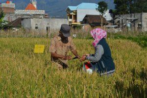 teknologi untuk mengendalikan hama dan mengelola lahan pertanian