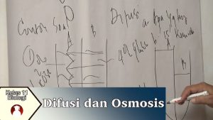 Difusi dan Osmosis video pembelajaran biologi SMA