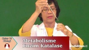 metabolisme enzim katalase video pembelajaran biologi SMA